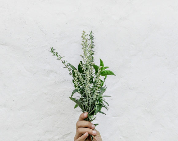 Hand holding a bunch of fresh herbs against white wall